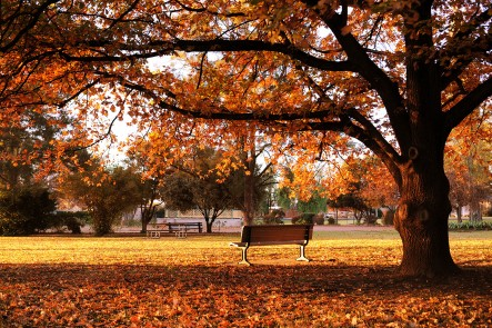 Photo of Robertson Park in Mudgee