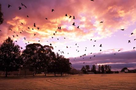 Photo of Walkers field in Mudgee, NSW