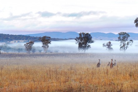 A photo of morning fog taken from Blacksprings road, Mudgee