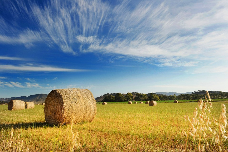 A photo of hay bales, Mudgee. Photo by Amber Hooper.