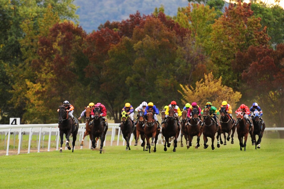 A photo then at the mudgee Horse races, Easter 2013. Photo by Amber Hooper.