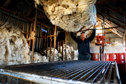 The Shearing Shed.